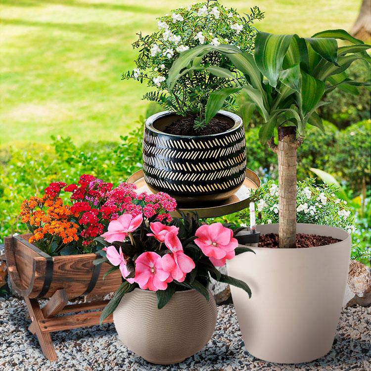 Plantas Naturales y Macetas